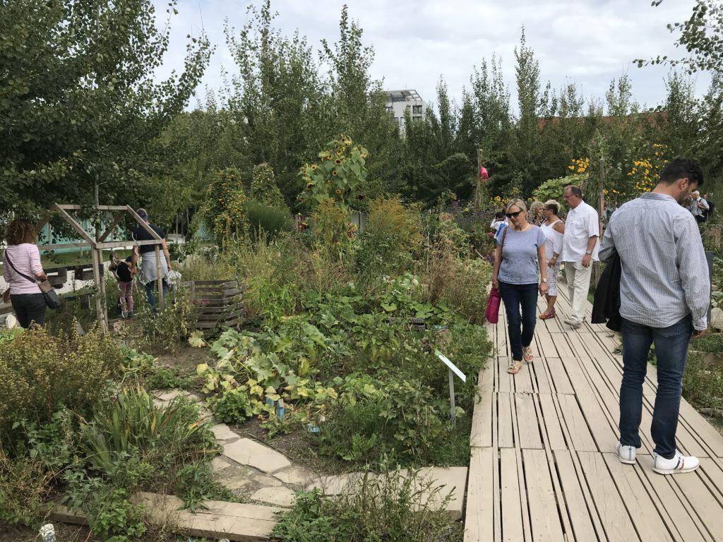 Im Interkulturellen Garten wurden Parzellen von Einzelpersonen bespielt. Die Gärten zeigen viel von den Biographien der Menschen. Ein gelungenes Projekt.